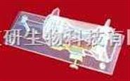 350克大白鼠固定器