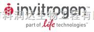 美国invitrogen小鼠细胞因子 检测试剂盒