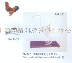 动物解剖模型|鸡骨骼模型|鸡骨骼|鸡骨骼标本