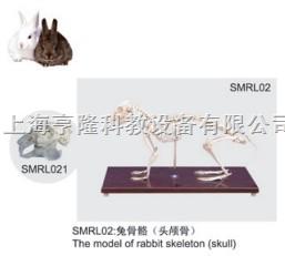 兔骨骼模型(头颅骨)|兔骨骼(头颅骨)|兔骨骼标本(头颅骨)