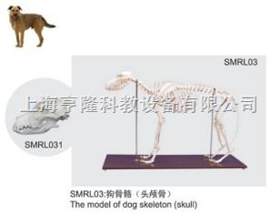 狗骨骼模型(头颅骨)|狗骨骼(头颅骨)|狗骨骼标本(头颅骨)