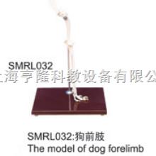 动物解剖模型|狗前肢模型|狗前肢|狗前肢标本