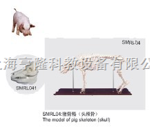 动物解剖模型|猪骨骼模型|猪骨骼|猪骨骼标本