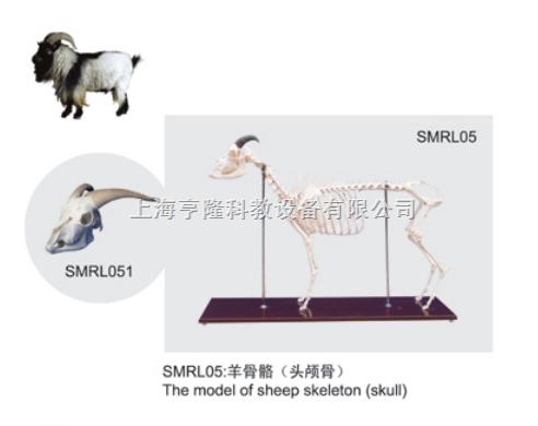 动物解剖模型|羊头颅骨模型|羊头颅骨|羊头颅骨骼标本