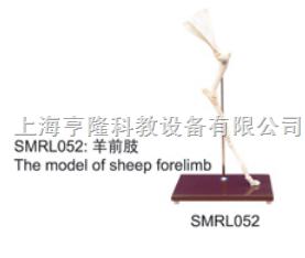 动物解剖模型|羊前肢模型|羊前肢|羊前肢骼标本