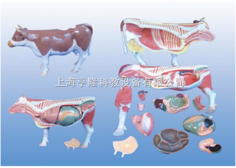 动物解剖模型|牛解剖模型|牛解剖