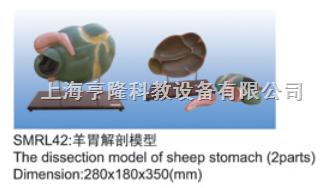 动物解剖模型|羊胃解剖模型|羊胃解剖