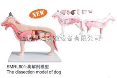 动物解剖模型|狗解剖模型|狗解剖