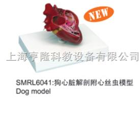 动物解剖模型|狗心脏解剖附心丝虫模型|狗心脏解剖附心丝虫