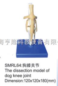 动物解剖模型|狗膝关节模型|狗膝关节
