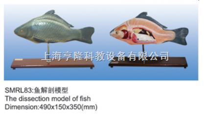 动物解剖模型|鱼解剖模型|鱼解剖