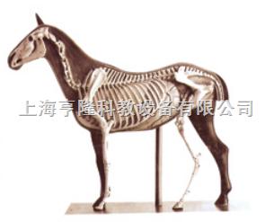 动物解剖模型|马解剖模型|马解剖