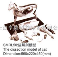 动物解剖模型|猫解剖模型|猫解剖