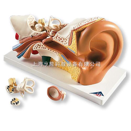 耳模型,实物3倍,4部分