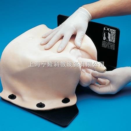 临床男性盆腔检查训练模型