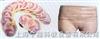 女性盆部横断断层解剖模型
