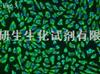RD(恶性胚胎横纹肌瘤细胞)