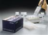 大鼠MIP-1β/CCL4 ELISA试剂盒