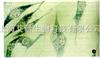 人肝癌细胞Li-7