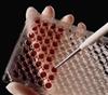 大鼠末端补体复合物C5b-9ELISA试剂盒