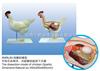 动物12bet12bet|鸡12bet12bet|鸡12bet