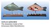 动物12bet12bet|鱼12bet12bet|鱼12bet